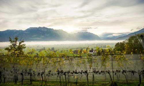 Jeder sechste Demeterbetrieb ist ein Weinbaubetrieb